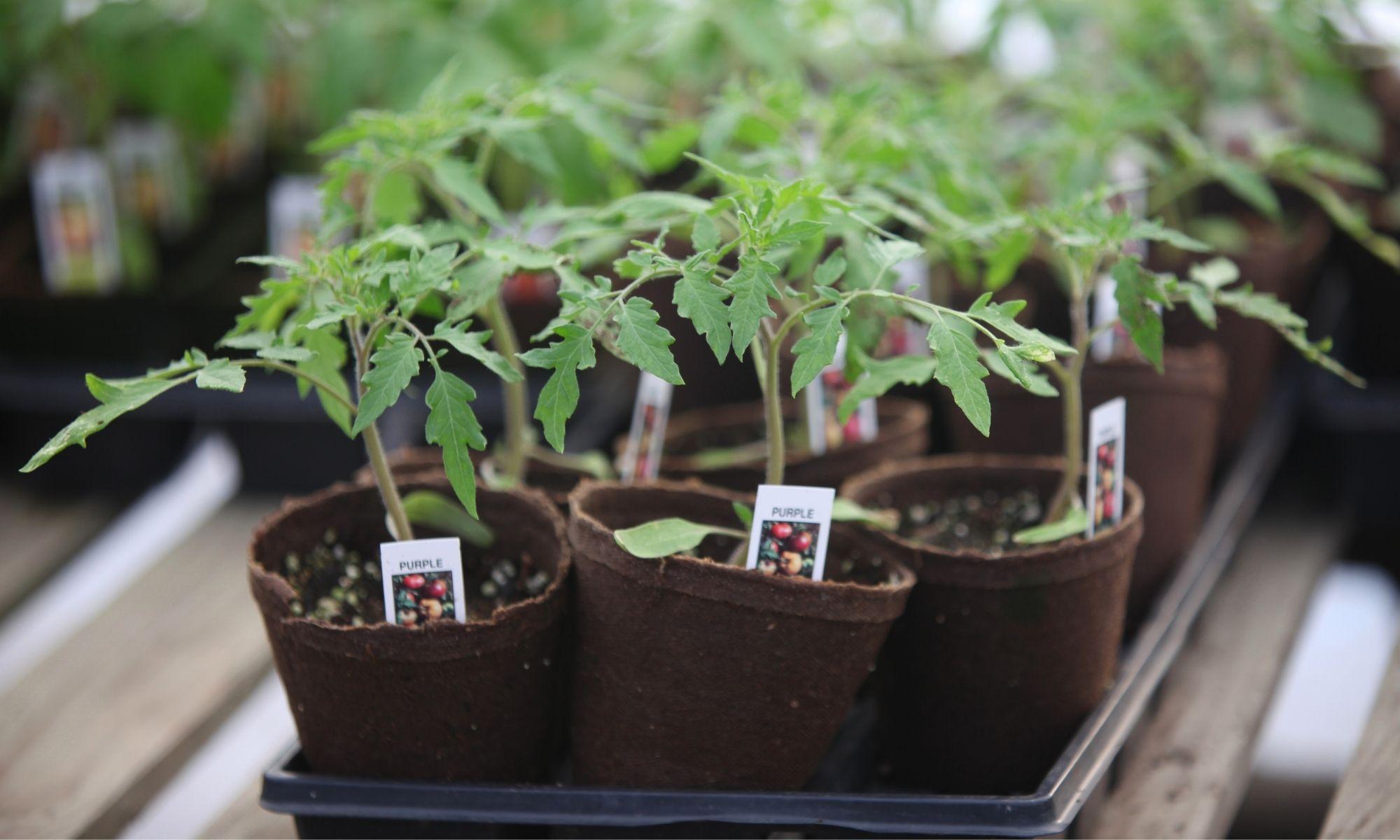 Horticultural Label Printers